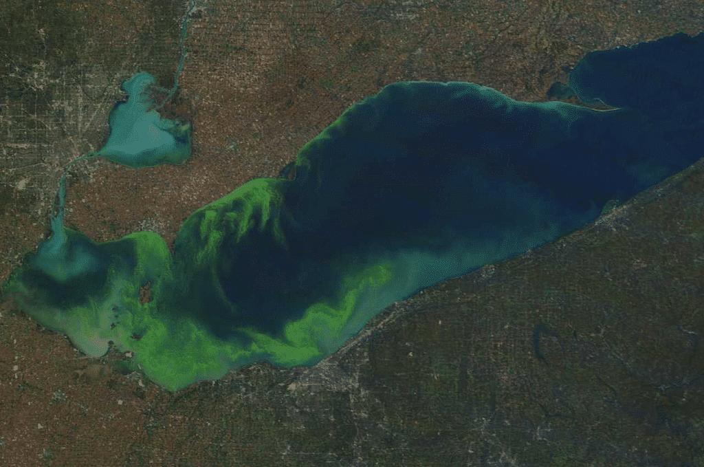 eutrophication, lake erie, lake erie algae, algae in lake erie, lake erie phosphates, phosphates algae