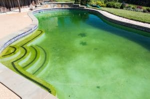 algae, but no phosphates, green pool, pool algae, green algae