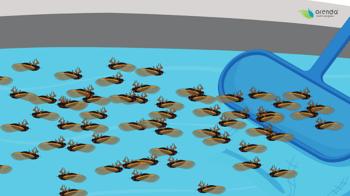 cicadas in swimming pools-4