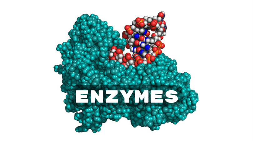 ENZYMES.png