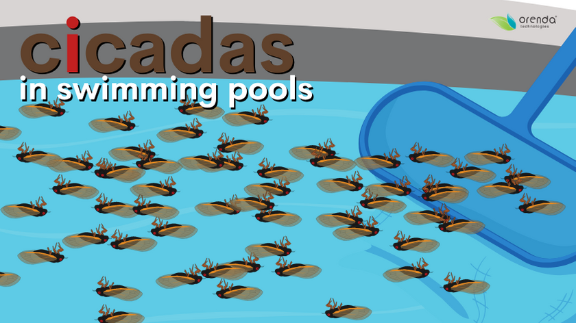 cicadas in swimming pools, brood x cicadas and pools, swimming pool cicadas, how to remove cicadas from pool