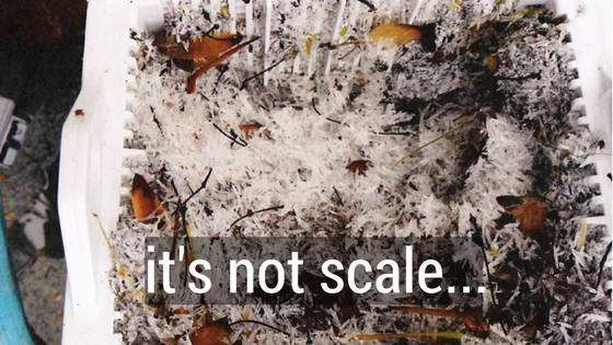 it's not scale..png